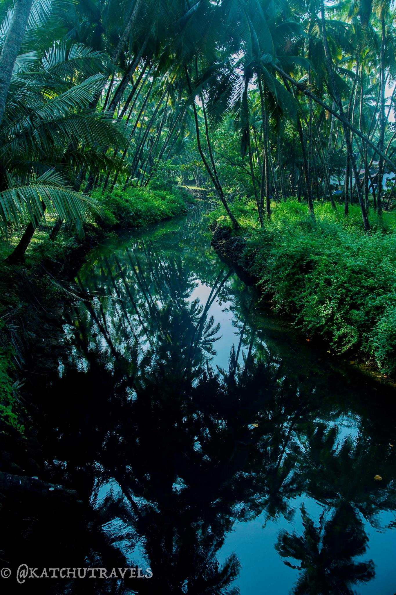 The backwaters in Agonda (Goa)