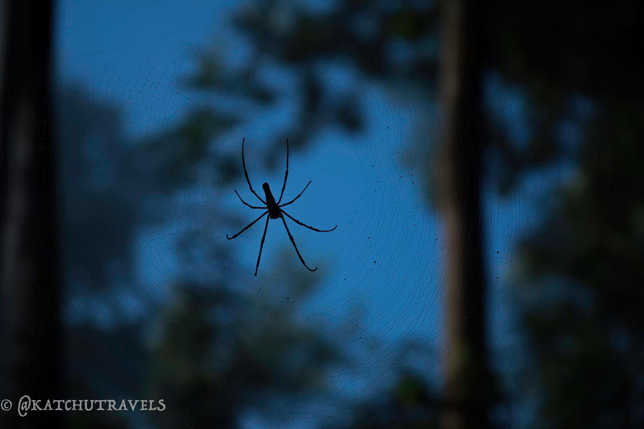 Spiders Web at Coorg