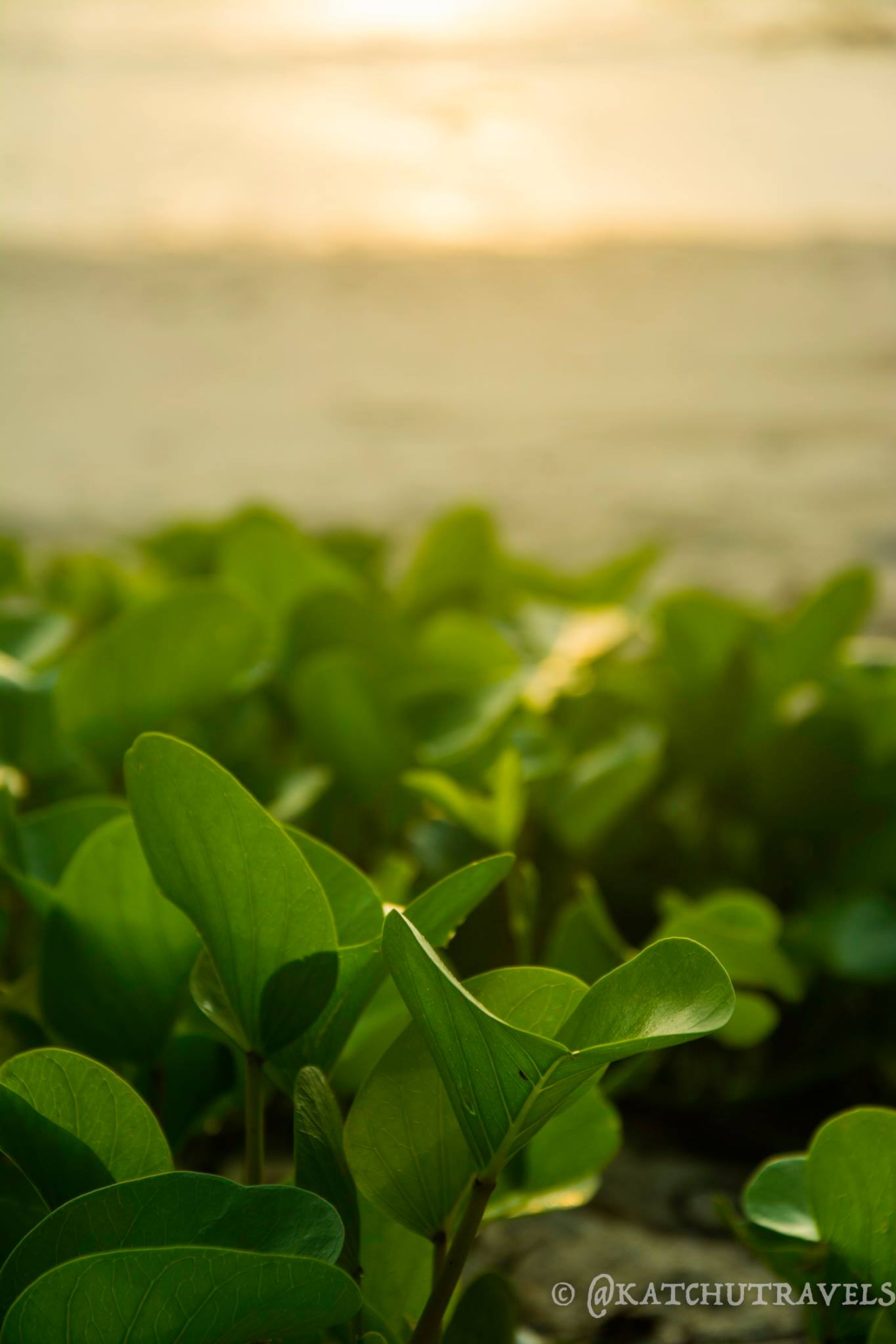 The sun's rays illuminate the plants on Kalapathar Beach(Havelock Islands in Andamans-India)