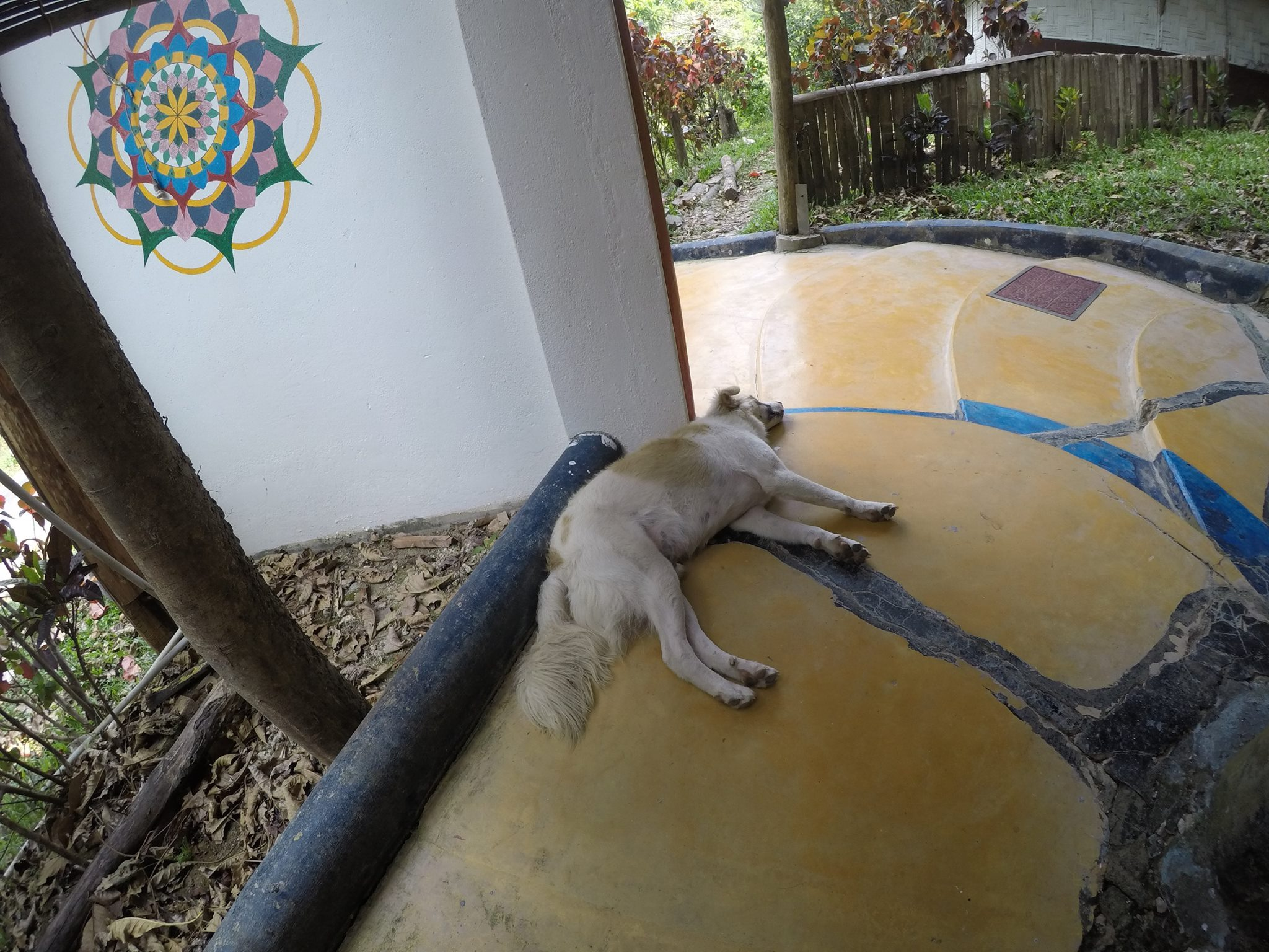 The little dog at Flying Elephants- Kalapathar Village in Havelock (Andaman Islands-India)