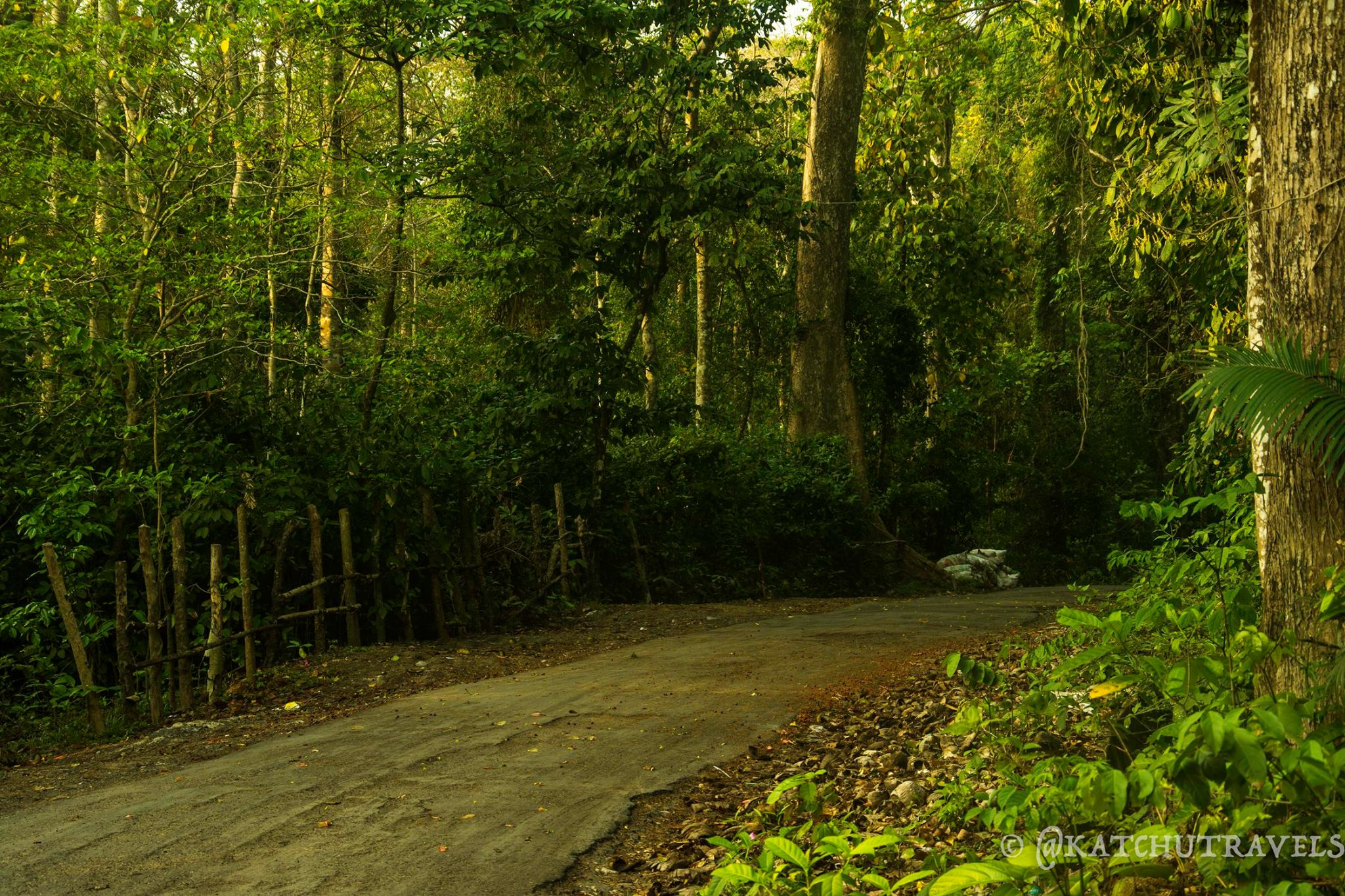 Driving through the Woods-Havelock Island