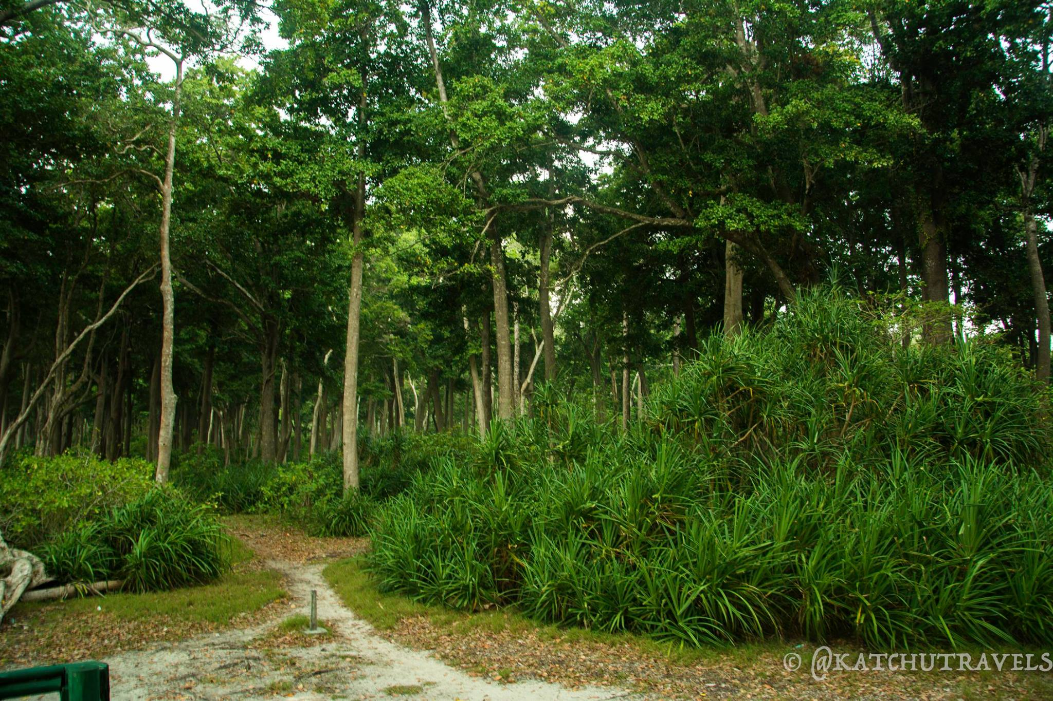 The Mahua woods of Radhanagar Beach