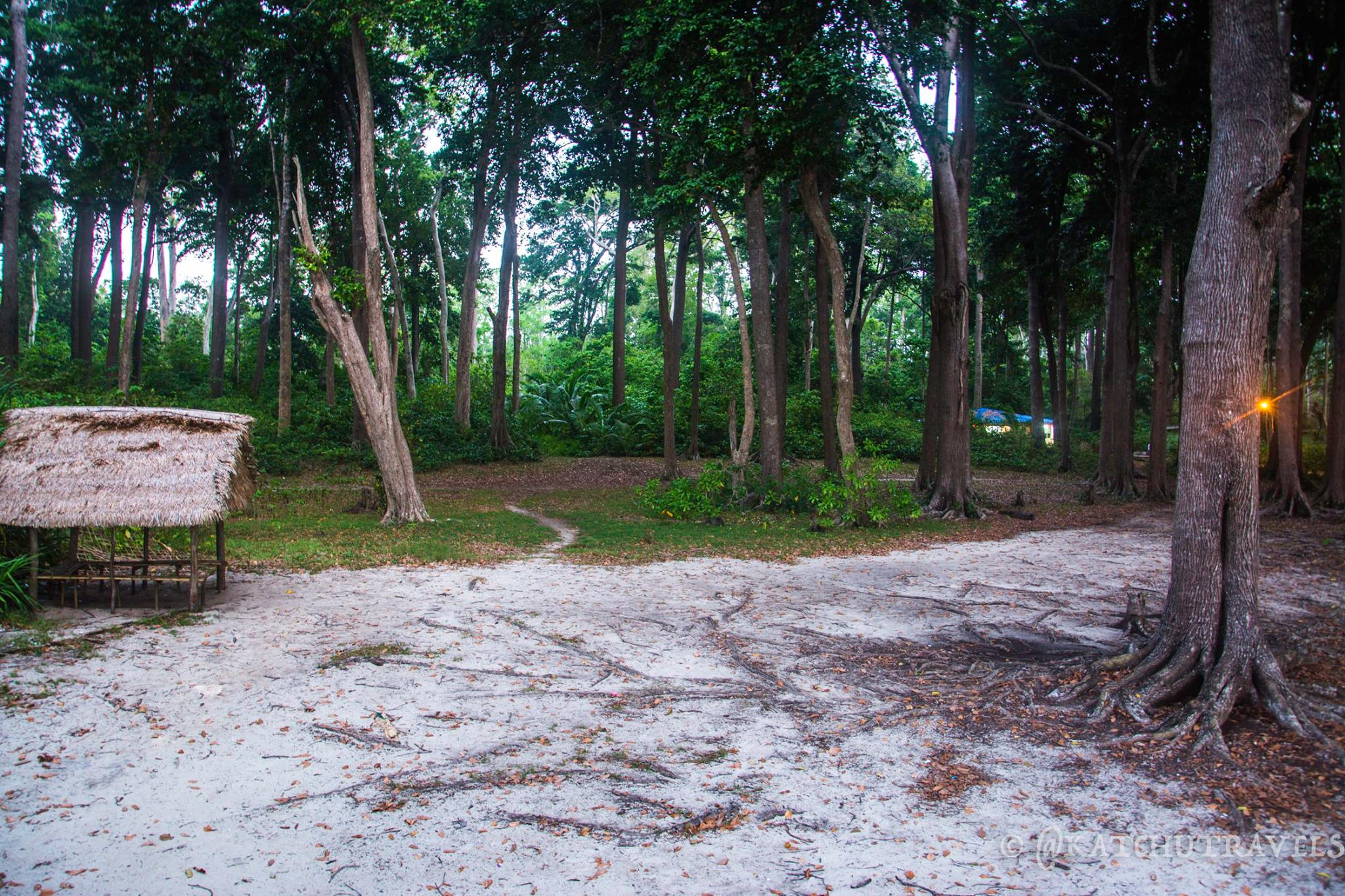 Wandering into the forests can be fun at Radhanagar Beach