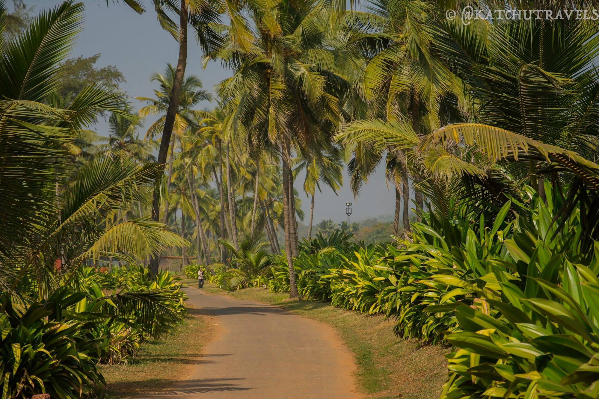 The road to Rajbaga Beach (South Goa-India)