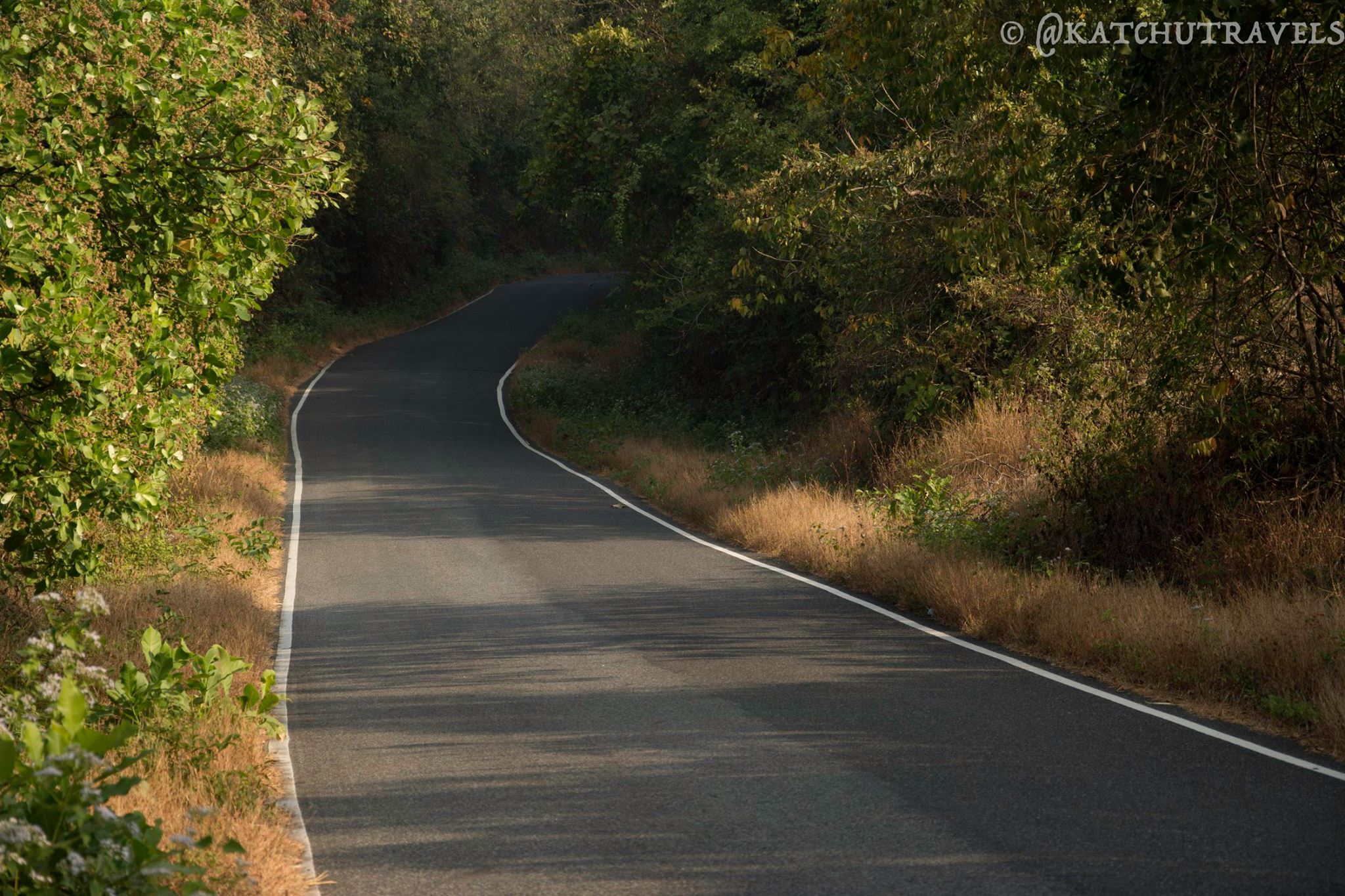 The curvy road into the woods enroute to Cabo De Rama [South Goa-India]