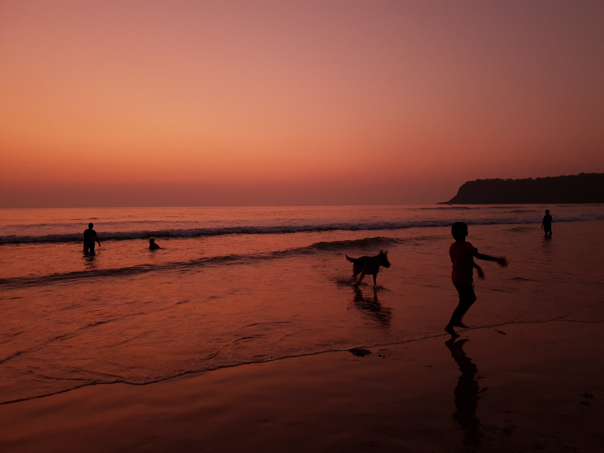 Nandu being chased by 'Whisky' at Agonda Beach-Goa
