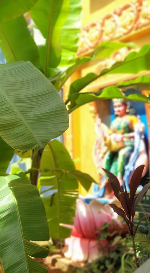 Idols at the Temple Dwaram, flanked by Banana Leaves at the Gangamma Temple in Malleswaram